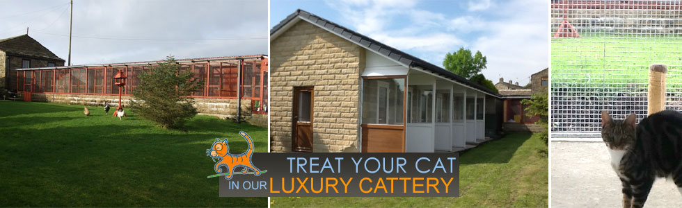 Cattery In Keighley - Luxury