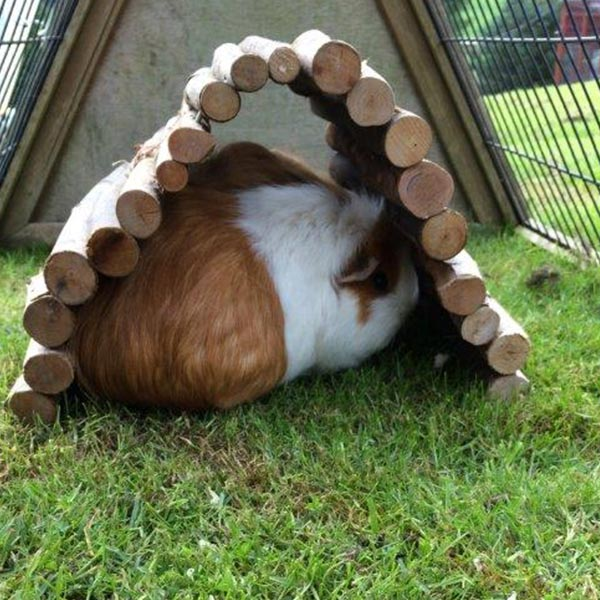 small-animal-guinea-pig-boarding-holiday-home