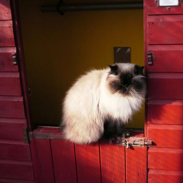 which-cattery-bradford-luxury-oakworth-cattery